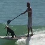 Give a dog a paddleboard