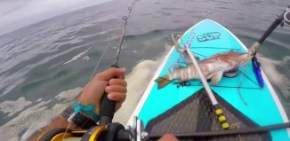 Panama SUP fishing Mecca