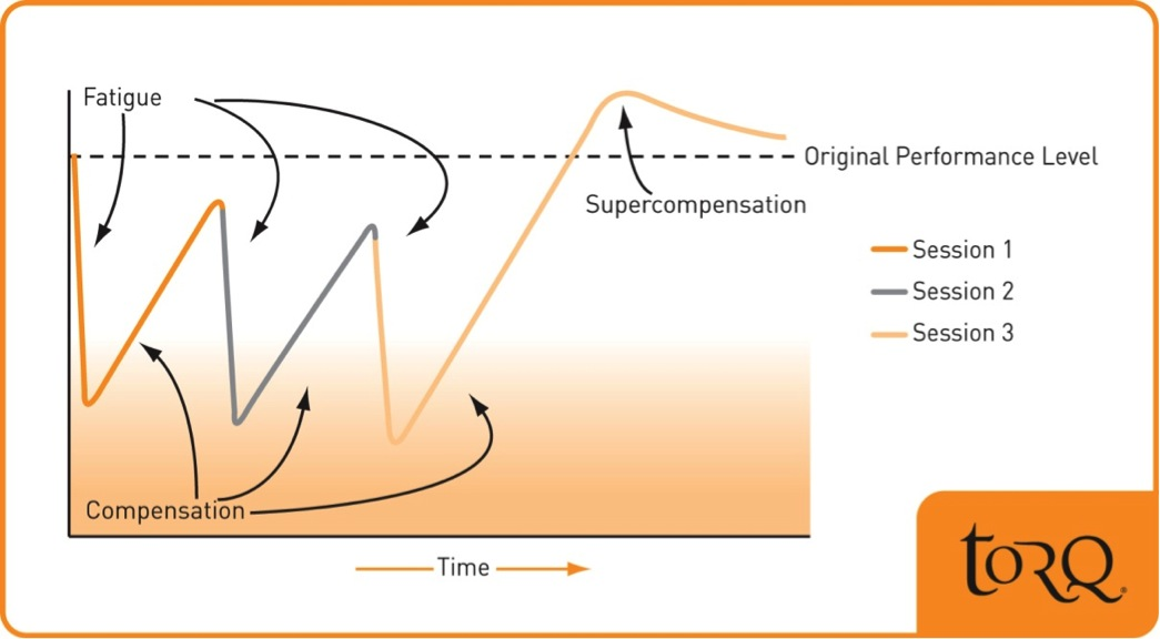TORQ Graph