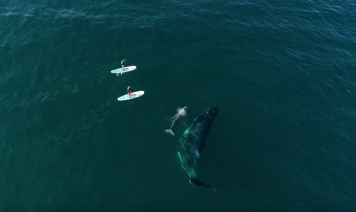 paddleboarding with whales